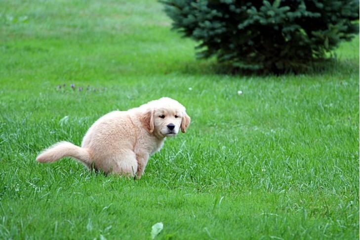 накласти чималі штрафи на тих хто не прибирає за своїми собаками та прослідкувати про їх стягнення