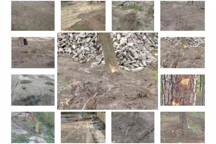 Пошкоджені корені багатьох дерев, а також берег великого озера
